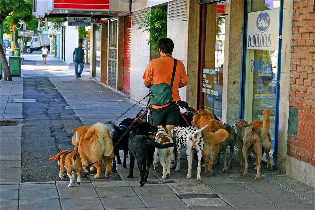 Dog Sitter a Londra